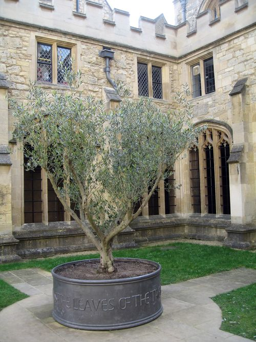 Oxford_tree