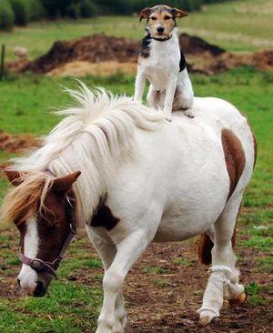Freddie-on-shetland-pony