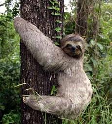 Sloth_2