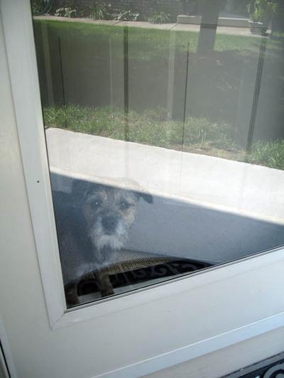 Guarddog_2