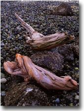 Driftwood_vert